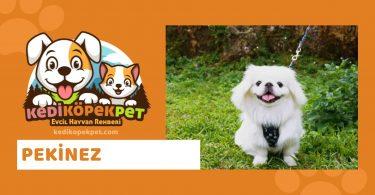 Pekinez , Pekinez Köpek Özellikleri , Pekinez Bakımı - Pekinez özellikleri