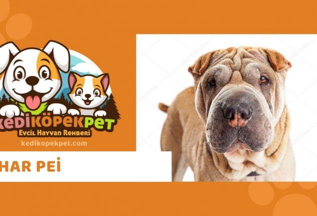Shar Pei , Shar Pei Köpek Özellikleri , Shar Pei Bakımı , Shar Pei Köpek Eğitimi