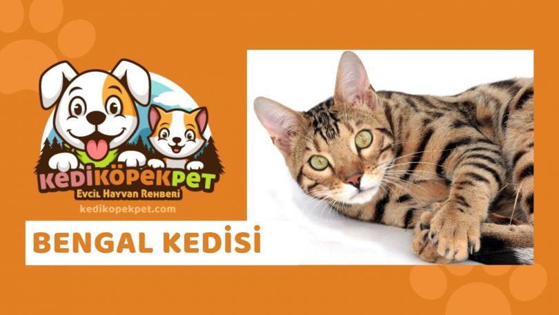 Bengal Kedisi , Bengal Cinsi Kedi Özellikleri , Bakımı