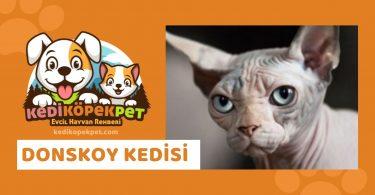 Donskoy Kedisi , Donskoy Cinsi Kedi Özellikleri , Bakımı
