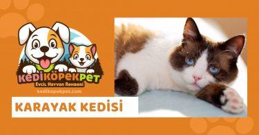 Karayak Kedisi , Karayak Cinsi Kedi Özellikleri , Bakımı