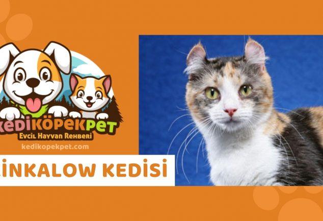 Kinkalow Kedisi , Kinkalow Cinsi Kedi Özellikleri , Bakımı