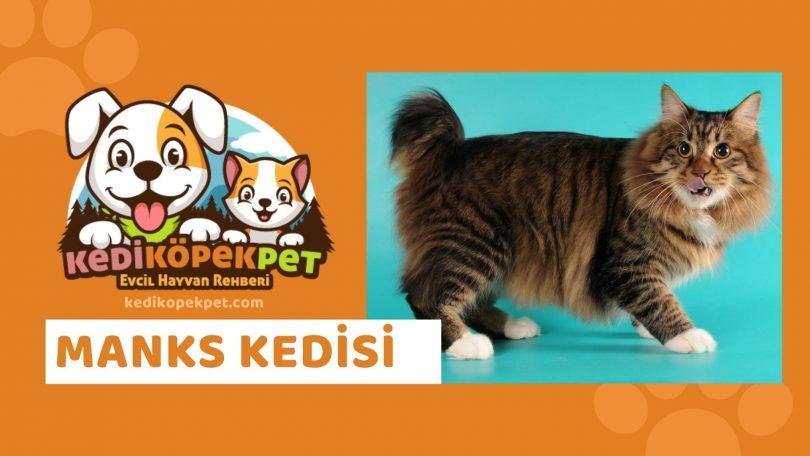 Manks Kedisi , Manks Cinsi Kedi Özellikleri , Bakımı