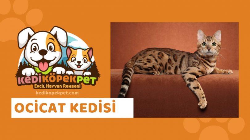 Ocicat Kedisi , Ocicat Cinsi Kedi Özellikleri , Bakımı