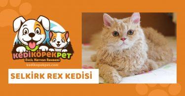 Selkirk Rex Kedisi , Peterbald Cinsi Kedi Özellikleri , Bakımı