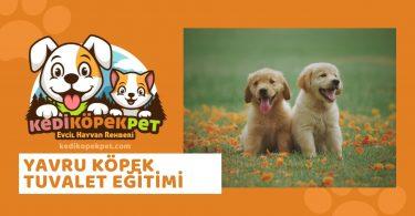Yavru Köpek Tuvalet Eğitimi Nasıl Verilir ? Yavru Köpek Çiş Kaka Eğitimi - yavru köpeğe tuvalet eğitimi - kedikopekpet.com